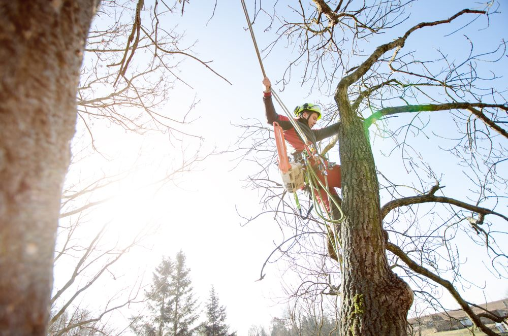 Tree Service Fort Collins Tree Care Services In Fort Collins Co